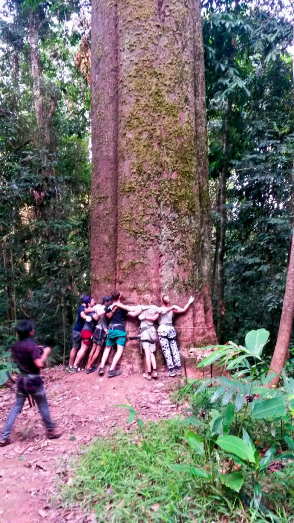 Lao Tree